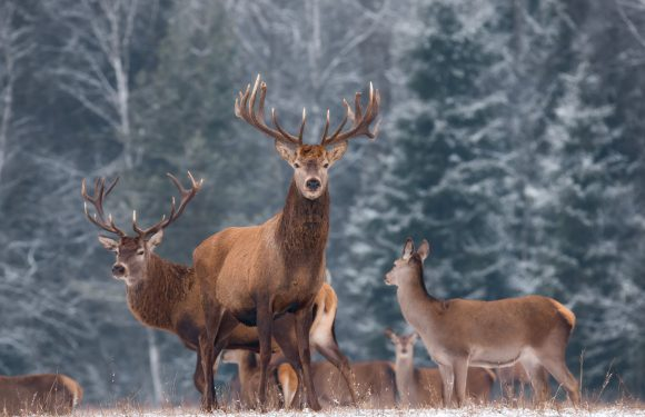 Strange Zombie Deer Disease Strikes Wildlife in 24 US States